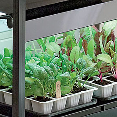 Raised Garden Beds Vegetables