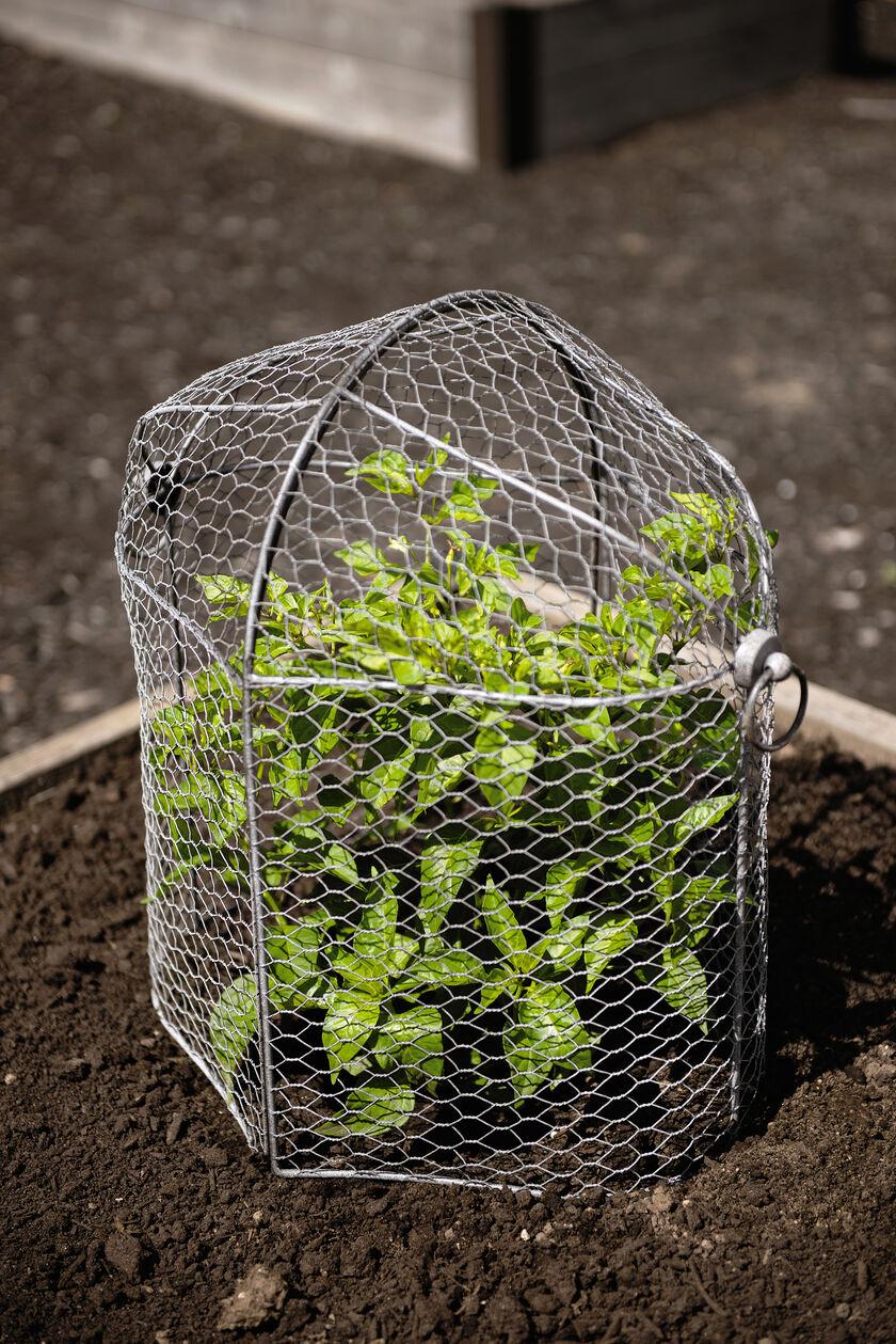 Chicken Wire Cloche Plant Protector  3