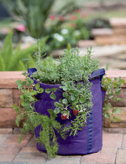 Gardener's Best® Strawberry and Herb Grow Bag