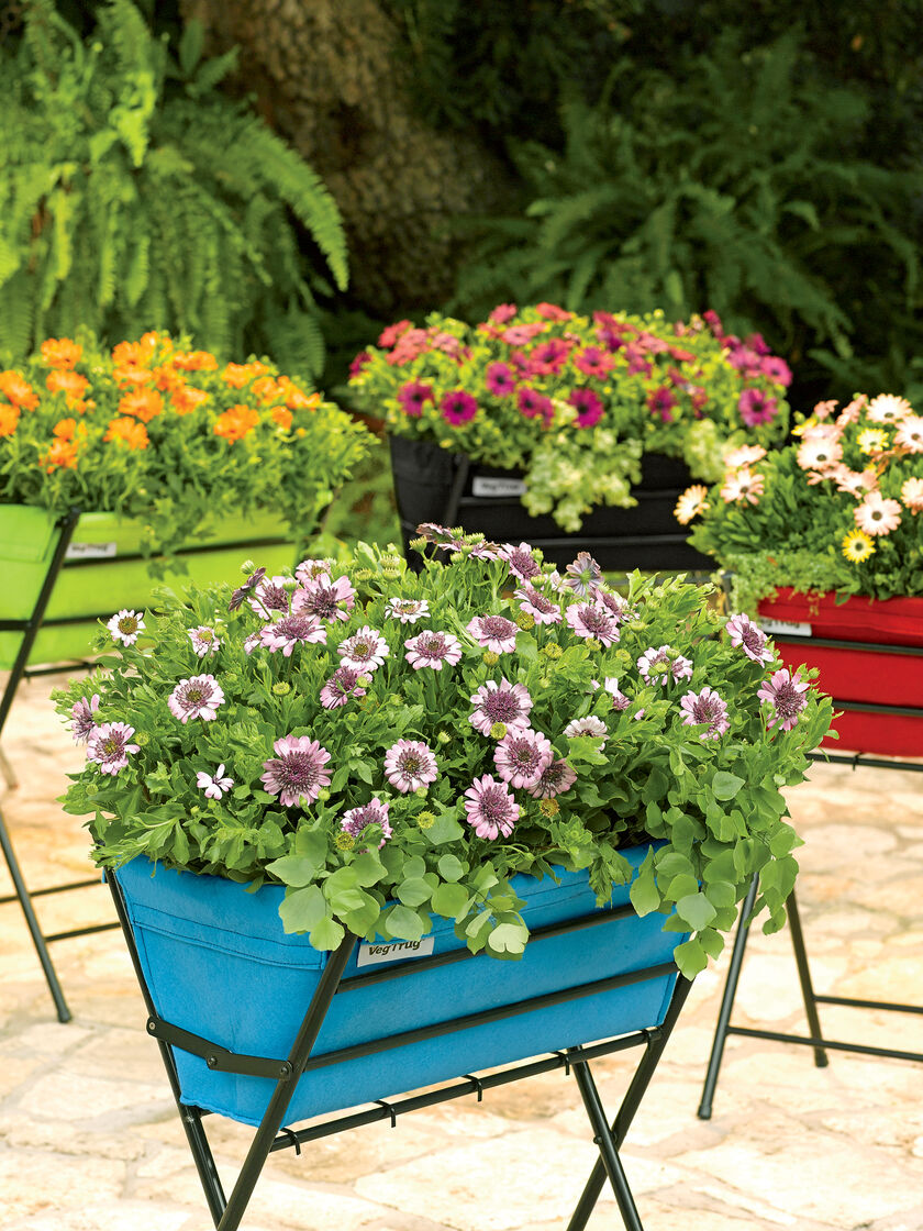 Vegtrug elevated planter for small spaces gardener 39 s supply for Arboles pequenos para jardin