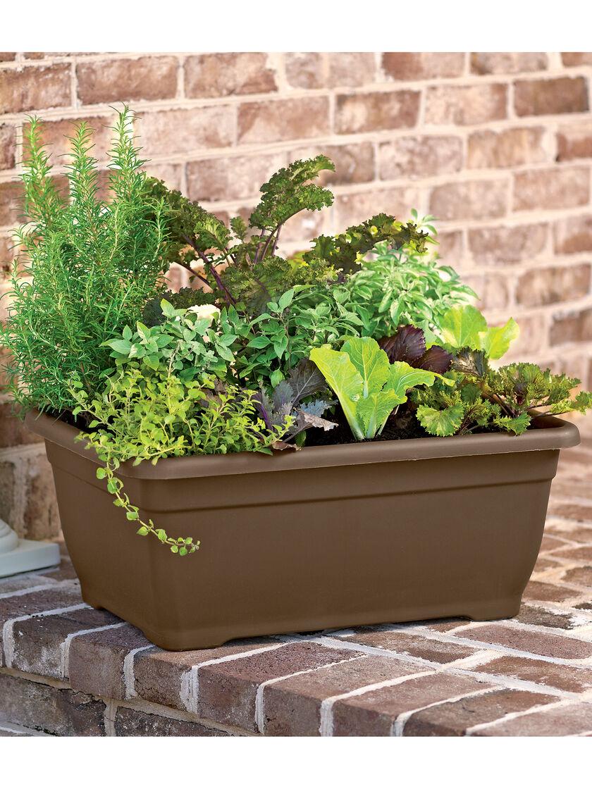 Vegetable Garden Boxes Veggies