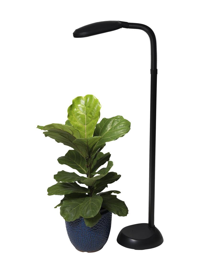 Cfl Grow Light Full Spectrum Floor Lamp Gardener S Supply