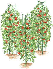 Tomato Ladders, Set of 3
