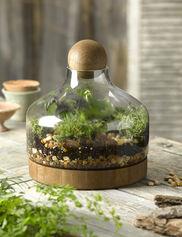 Glass & Wood Terrarium, Large