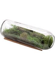Moss Terrarium