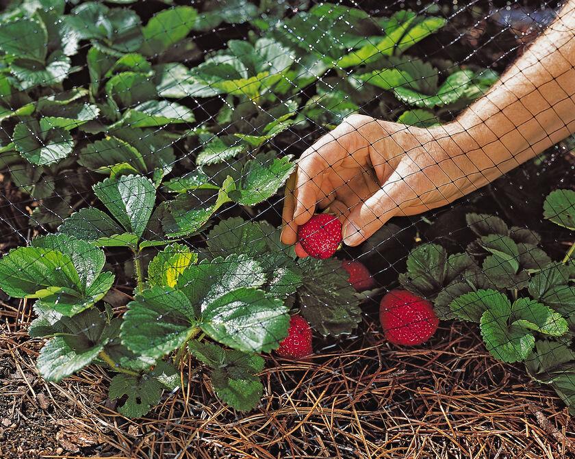 Bird netting protects berries gardener 39 s supply for Garden pool netting