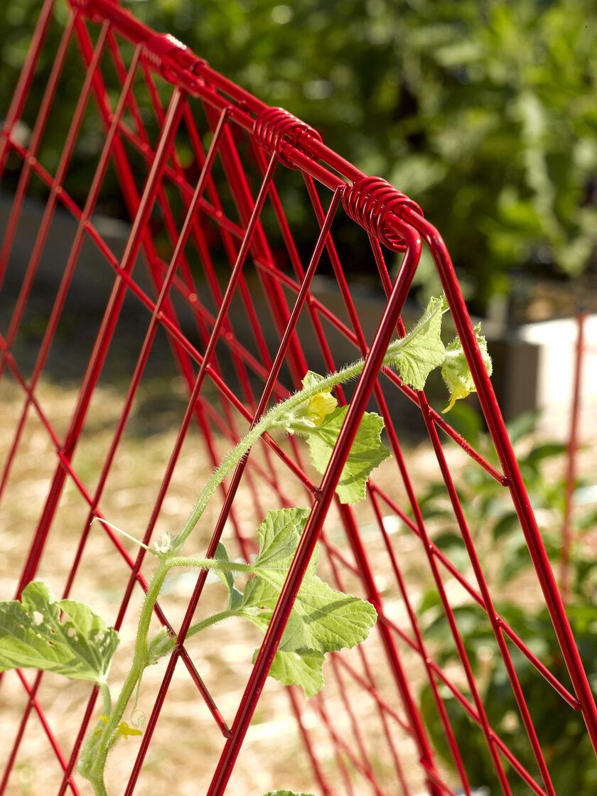 Deluxe Cucumber Trellis Gardener S Supply