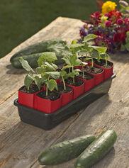 """Peel Away™ 2"""" Seedling Pot Kit"""