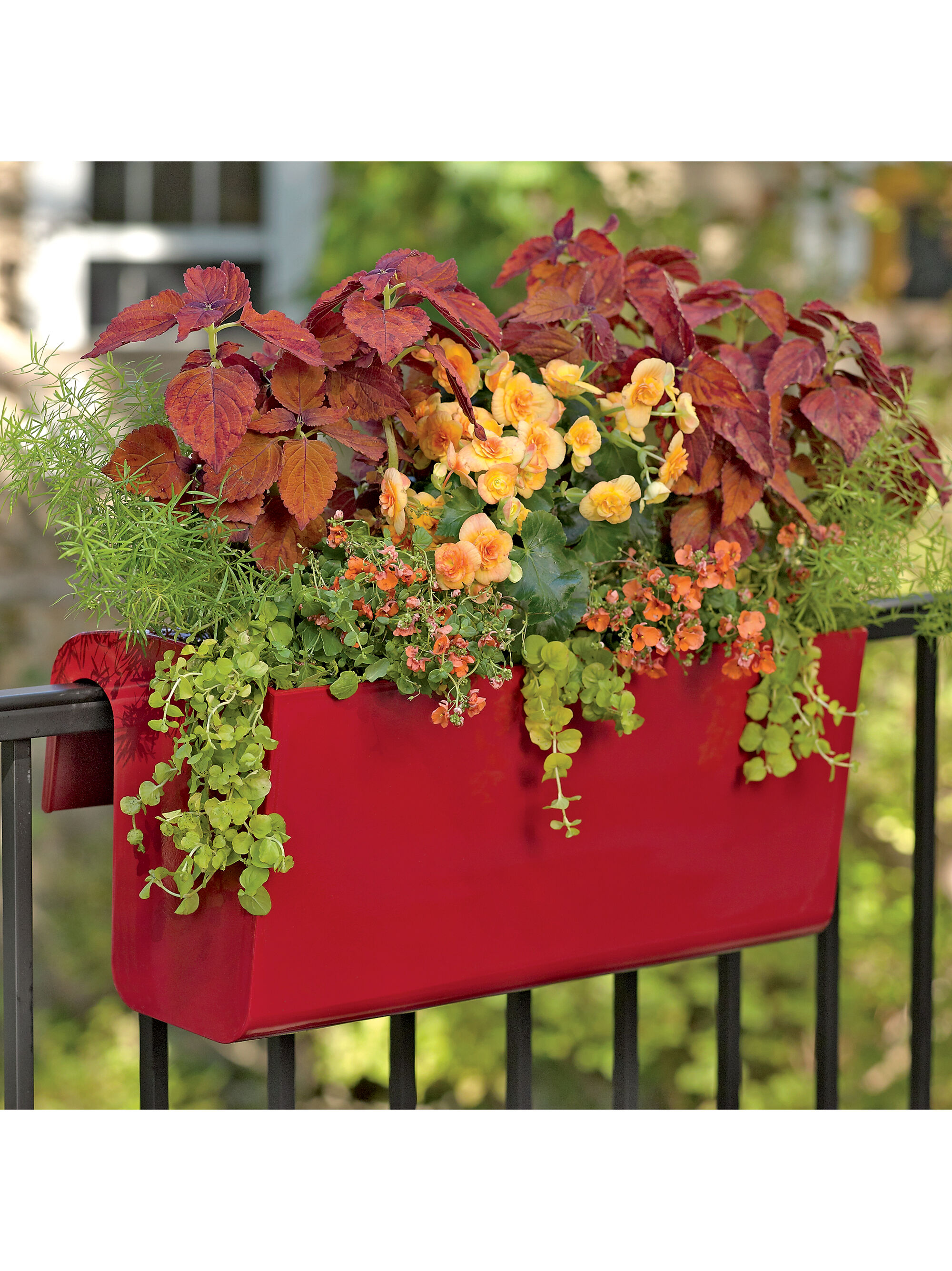 Viva Self Watering Hanging Basket Hanging Flower Baskets