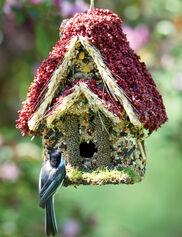 Bird Seed Woodland Cottage