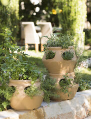 Strawberry & Herb Planter