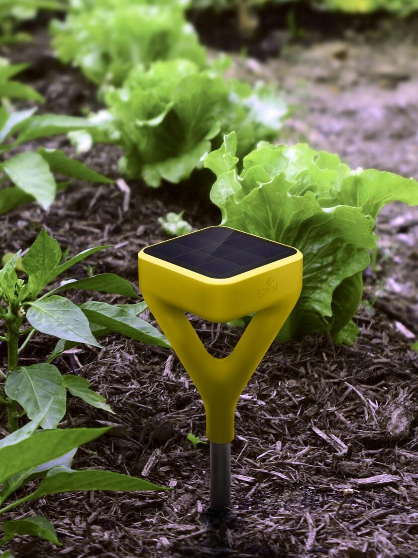 Edyn garden sensor wifi soil moisture sensor plant for Garden soil
