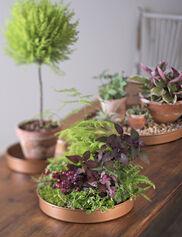 Round Plant Trays