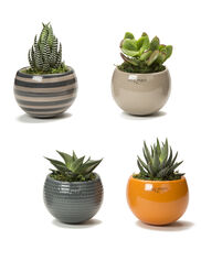Gifts Under 40 For The Gardener On Your List Gardeners Com