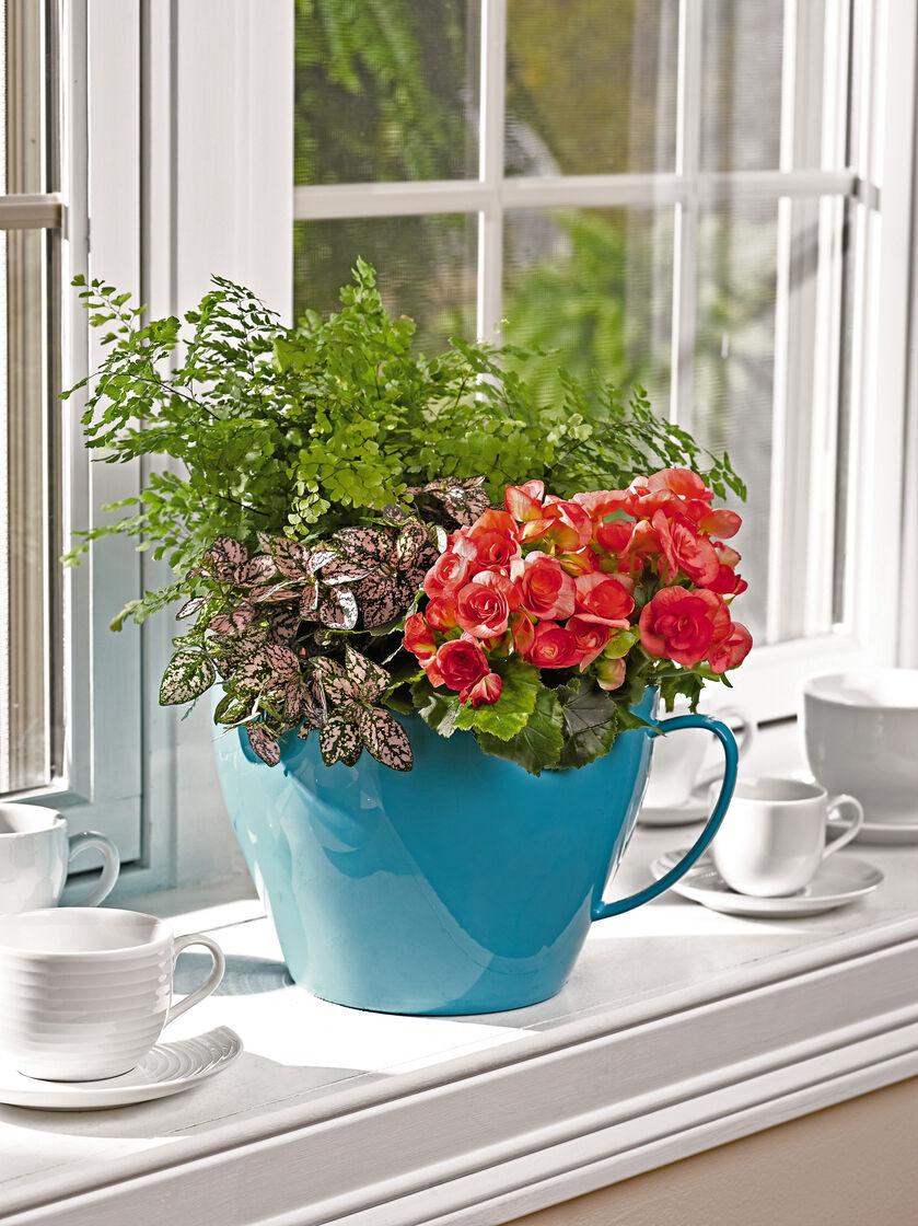 Teacup Planter Viva Self Watering Giant Teacup