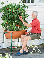 Tomato Success Trolley