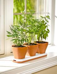 Convertible Herb Pot Set