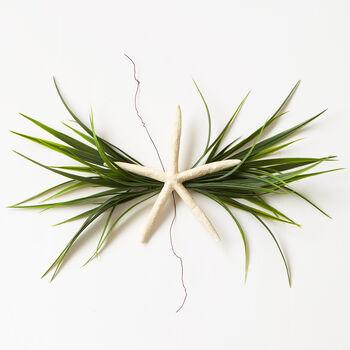 Starfish/Greens Wreath Accessory