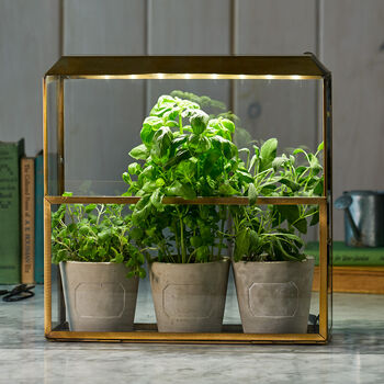 Countertop Grow House