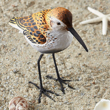 Shorebird Collection