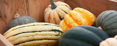 Guide to Post-Harvest Handling & Storage of Fall Crops