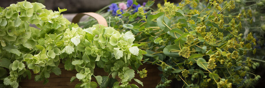 Bouquet Fillers