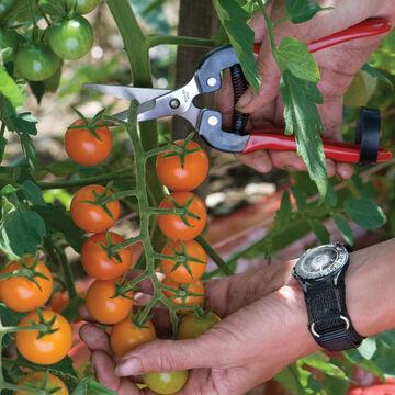 Harvest Quickly