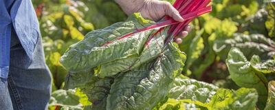 New! Best-in-Class Certified-Organic Varieties