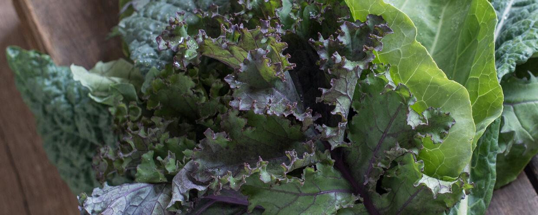Kale: The Winter Garden Workhorse