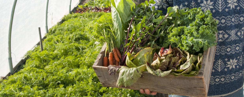 Savor the Flavor of These Winter-Harvest Varieties