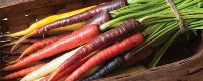 Carrots for Planting in Mid to Late Summer…