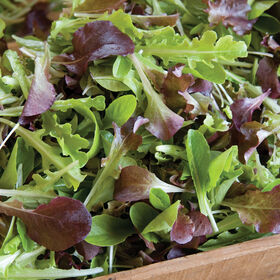 Encore Lettuce Mix