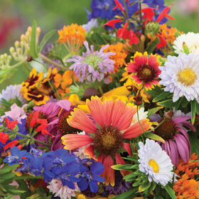 Butterfly and Hummingbird Mix Flower Collections and Mixes