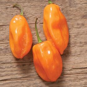 Habanero Hot Peppers