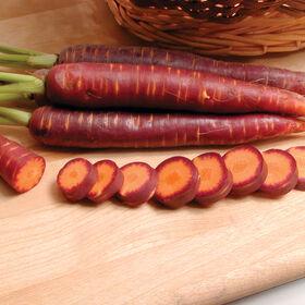 Purple Haze Main Crop Carrots