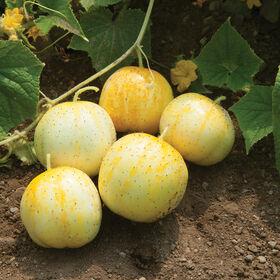 Lemon Specialty Cucumbers