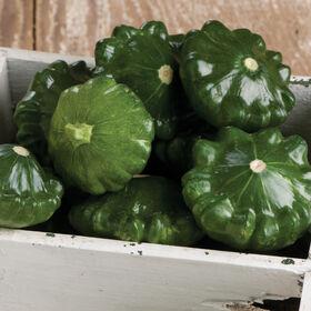 Summer Squash Seeds - Organic Varieties | Johnny's ...