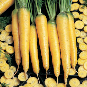 Yellowstone Colored Carrots