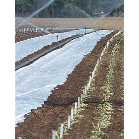 "Agribon+ AG-15 Insect Barrier - 118"" x 250'"