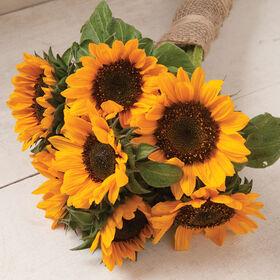 Sonja Tall, Branching Sunflowers