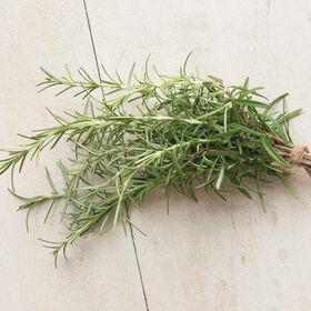 Rosemary Rosemary