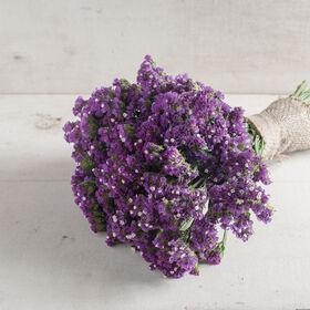 Seeker Purple