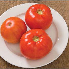 Skyway Tomatoes