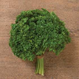 Darki Leaf Parsley