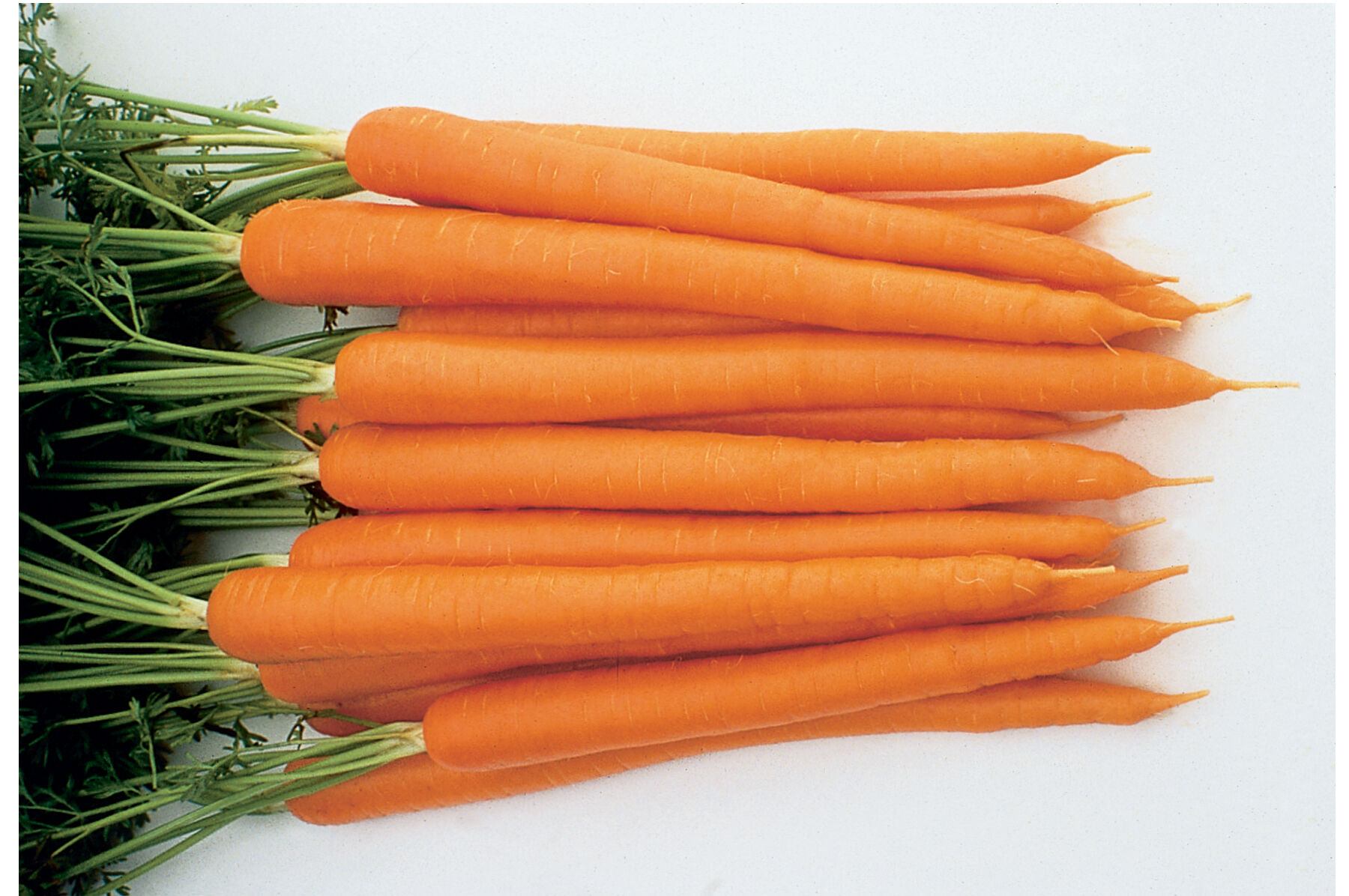 Carrot. Varieties for food, storage and processing 2