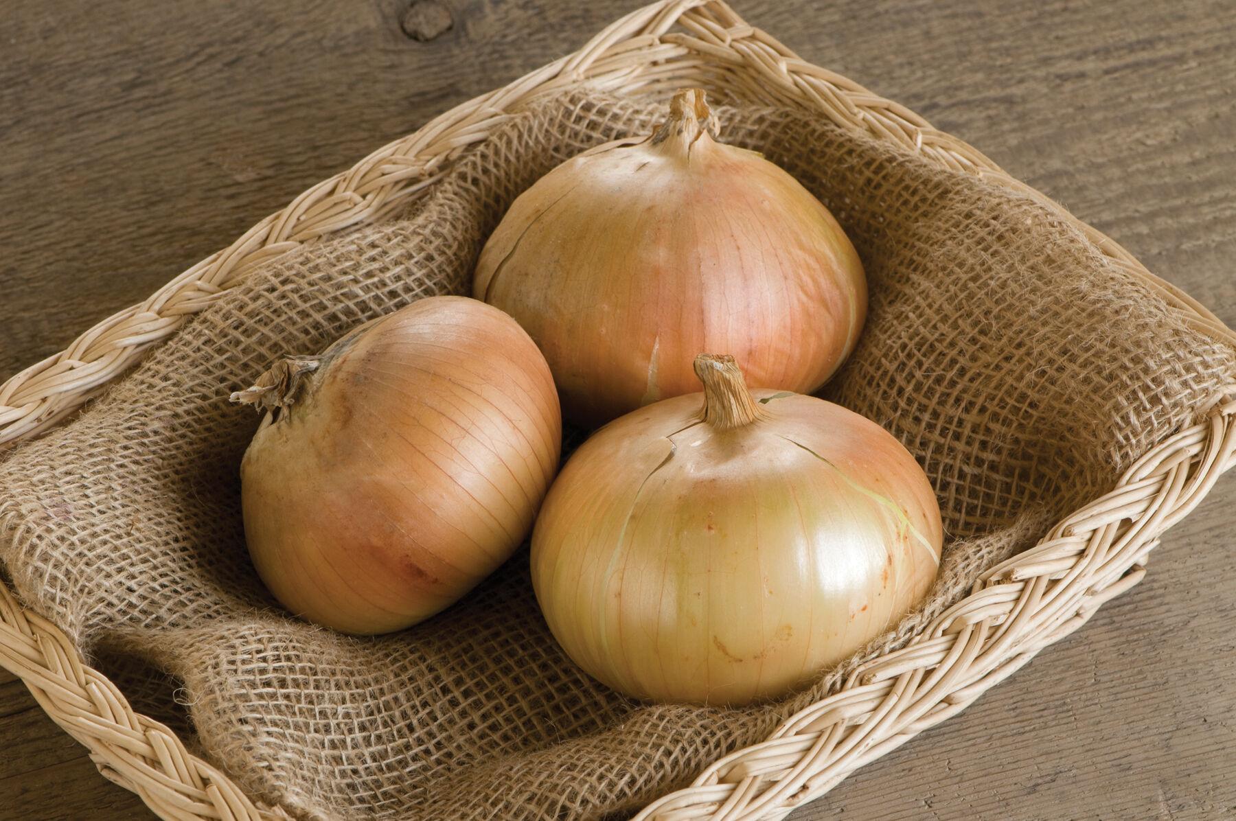 Onion Centurion: variety description, cultivation features and reviews 88