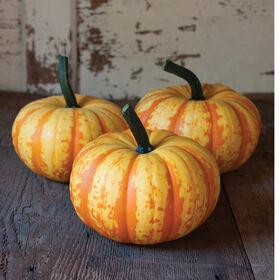 Blaze Specialty Pumpkins