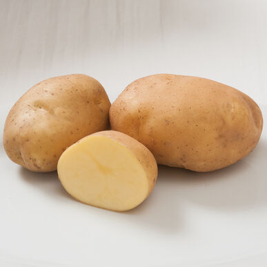 Satina - Potato Tubers | Johnny's Selected Seeds