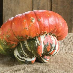 Turk's Turban Specialty Pumpkins