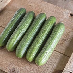 Katrina Cucumbers